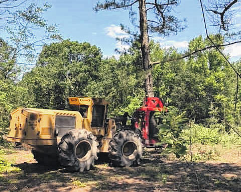 Photo courtesy of J.A. Bolton                                 A feller-buncher gets the job done.