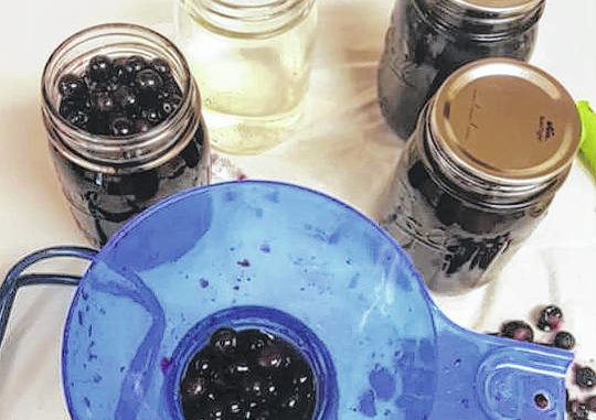 Photo courtesy of Janice Roberts                                 This picture shows the process of making blueberry jam.