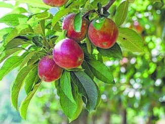 Fruitful planning: How to start a new orchard