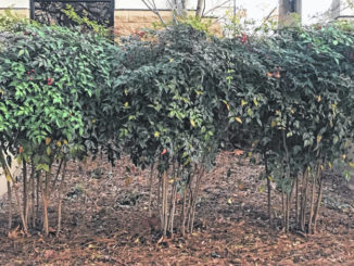 Pruning: An important but misunderstood task