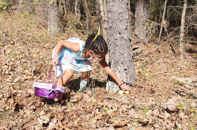 <p>Gavin Stone   Daily Journal</p>                                 <p>Aliana finds an egg hiding next to a tree.</p>